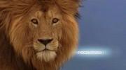好殘忍的動物世界,水牛和獅子對決,最后鹿死誰手