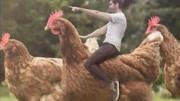 人类繁殖的变种巨鸡,身高接近1米