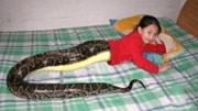 女孩懷孕 肚中是3條蛇